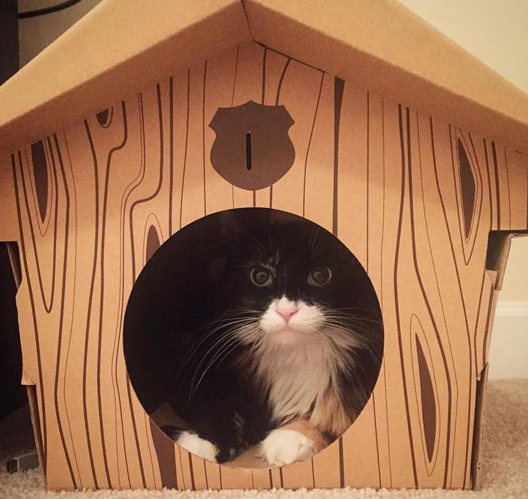 Домик из картона для кота